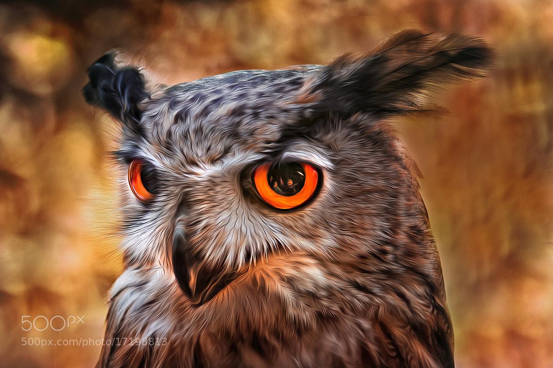 Photograph big eyes by Detlef Knapp on 500px