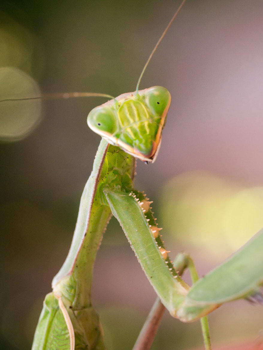 Photograph Mantis - 2 by Amine Fassi on 500px