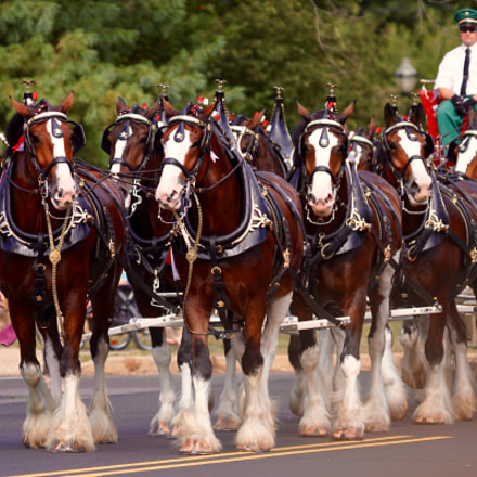 Clydesdales in New Hope, Sony ILCA-77M2, Sony 70-200mm F2.8 G SSM II (SAL70200G2)