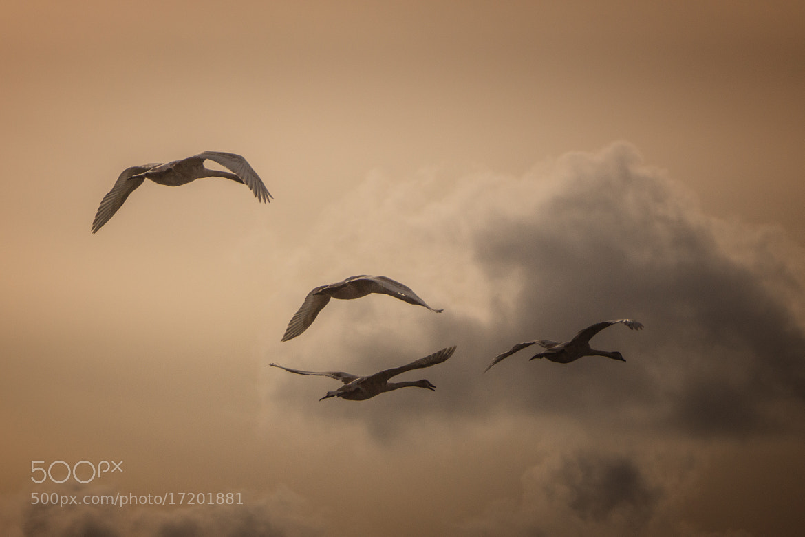 Photograph Flying home by Ralf Trogemann on 500px