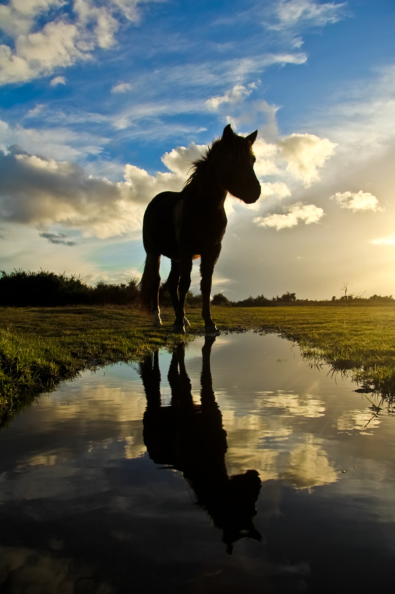 Photograph Horse Reflection by Lewis Blackburn on 500px