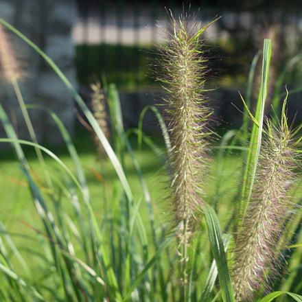 A garden detail