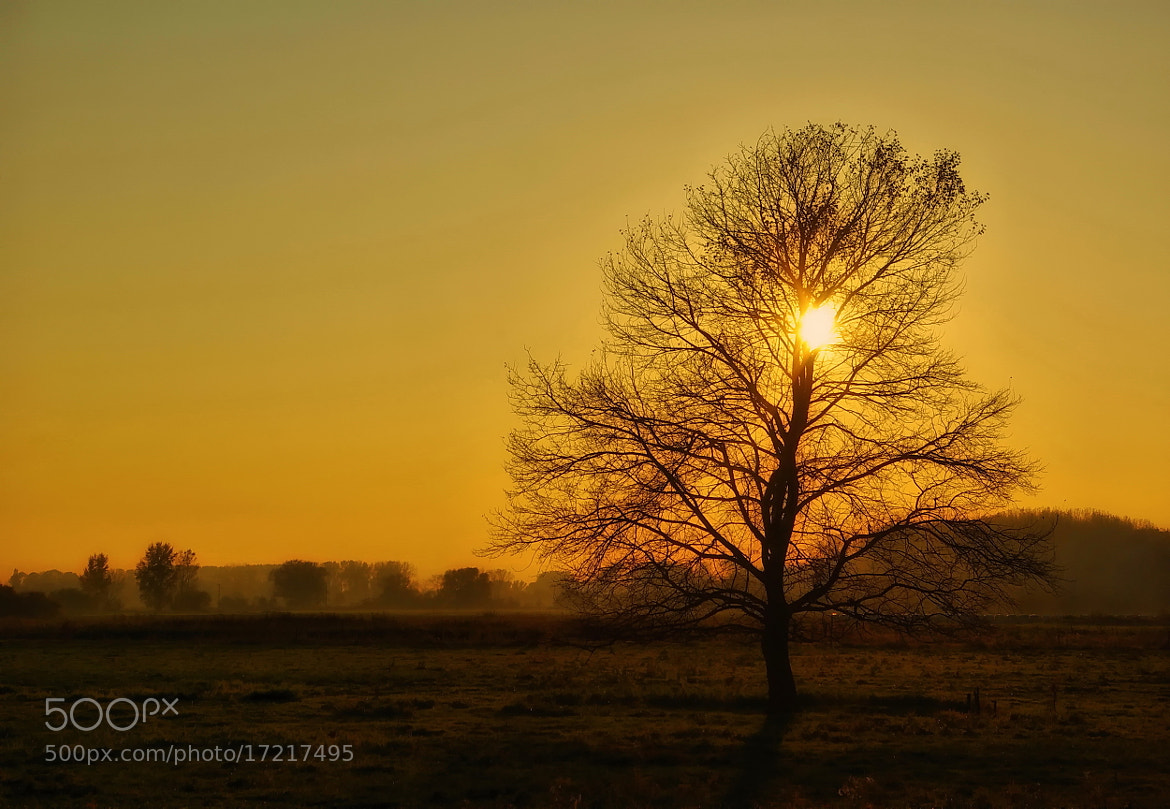 Photograph SUN & TREE by Kersten Studenski on 500px