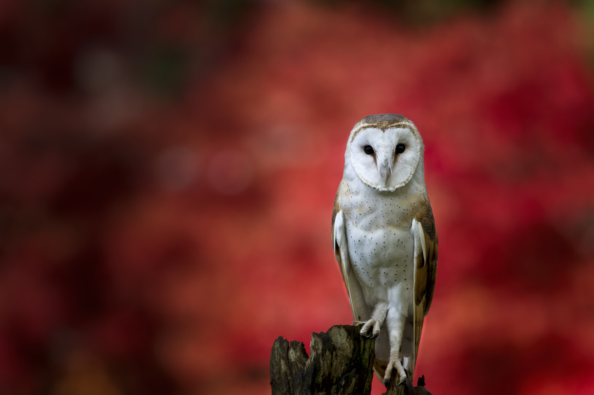 Photograph The Messenger by Alessandro Cancian on 500px