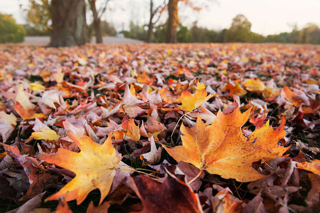 Photograph autumn leaves by Sudarshan Mondal on 500px