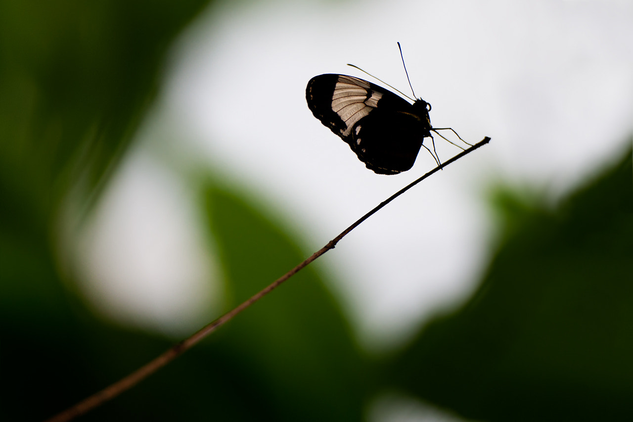 Photograph butter fly by Sudarshan Mondal on 500px
