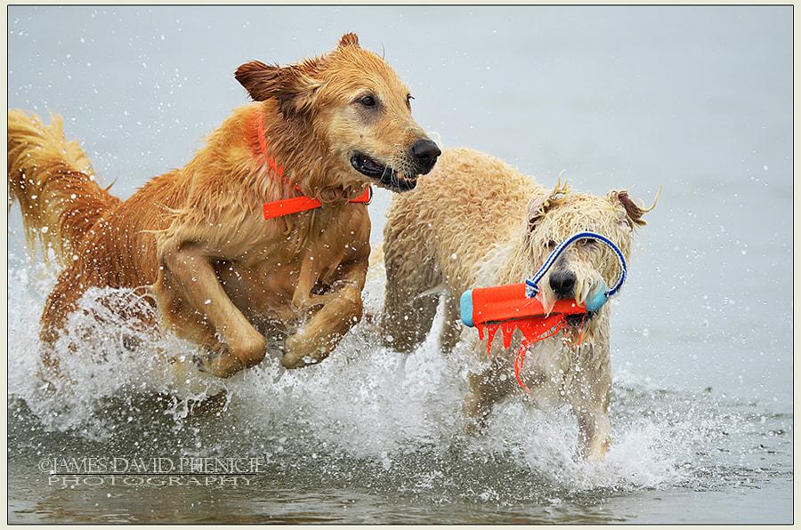 Dog Beach Series:  The Return