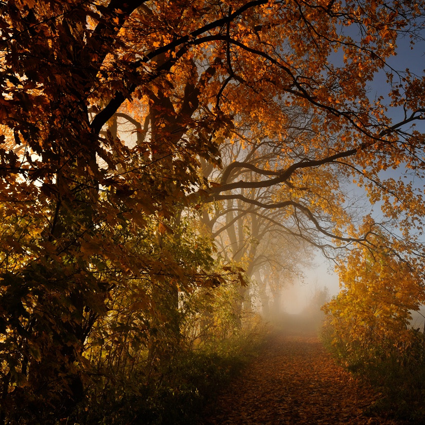 Photograph abundance of autumn by Sebastian Luczywo on 500px