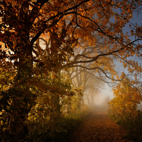 abundance of autumn by Sebastian Luczywo (SebastianLuczywo)) on 500px.com