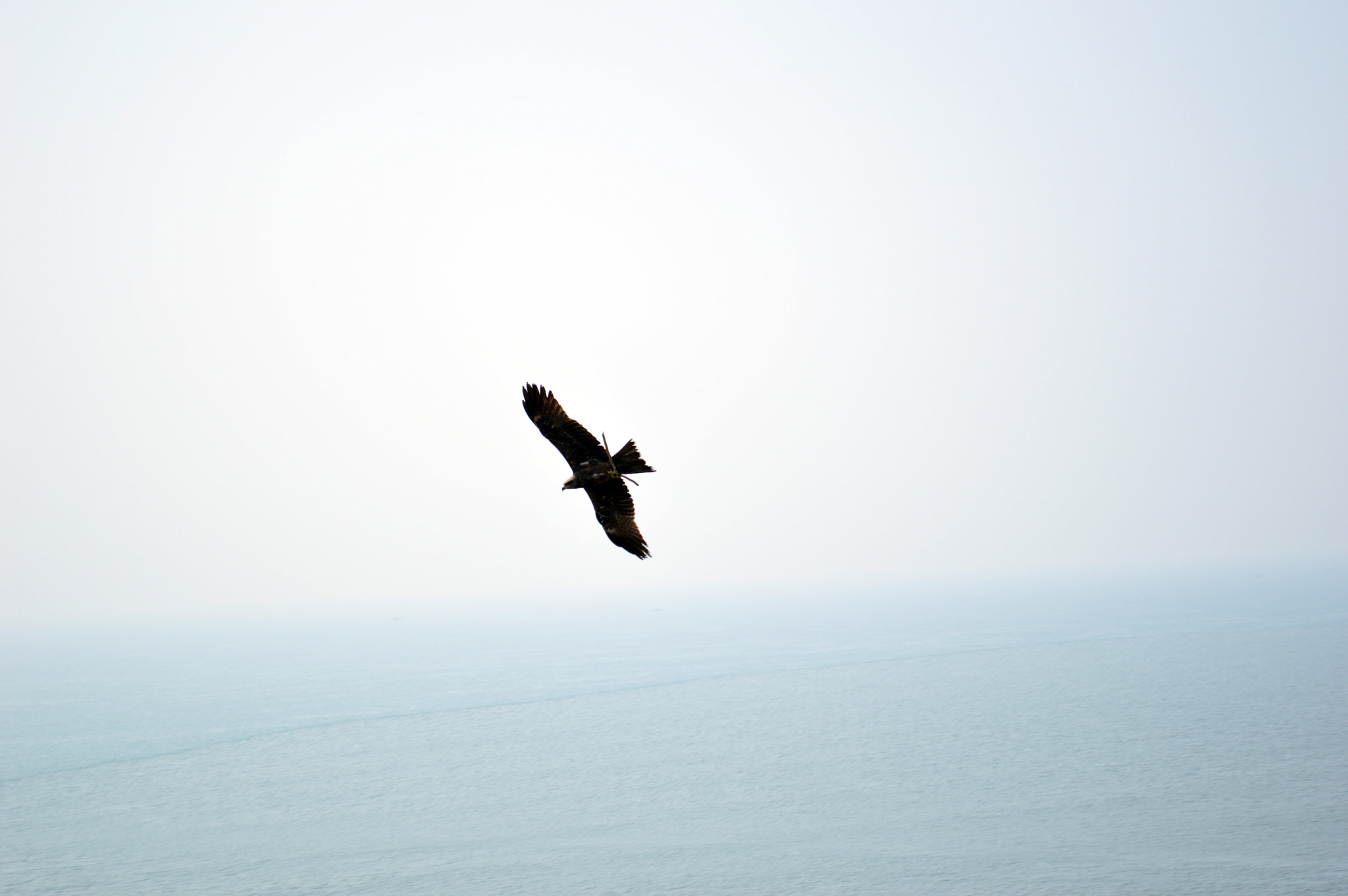 Photograph Eagle by sajan Laks on 500px