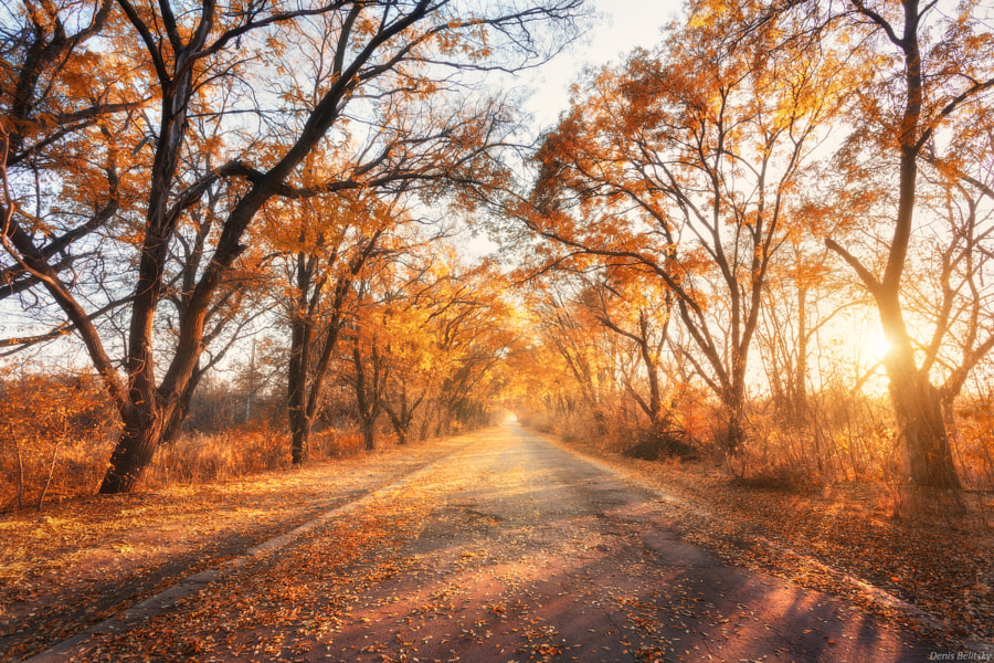 Autumn forest with country road at sunset by Denys Bilytskyi on 500px.com