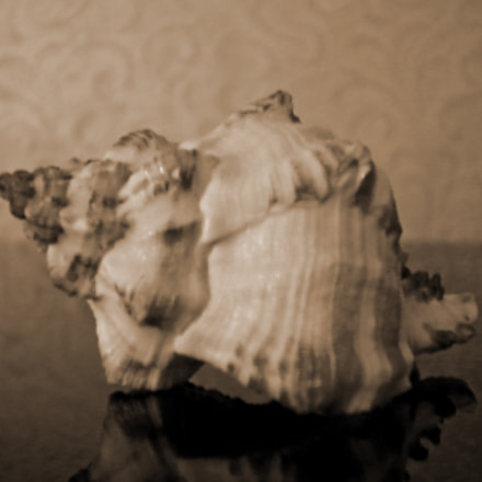 Seashell, Nikon COOLPIX S203