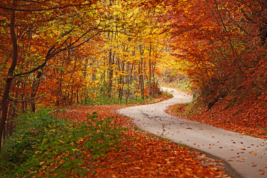 Photograph Road into Autumn by Pavel Pronin on 500px