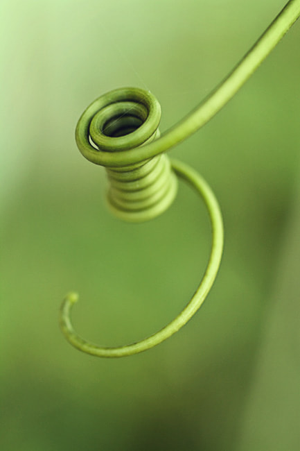 Photograph Spool of Thread by Julia S on 500px