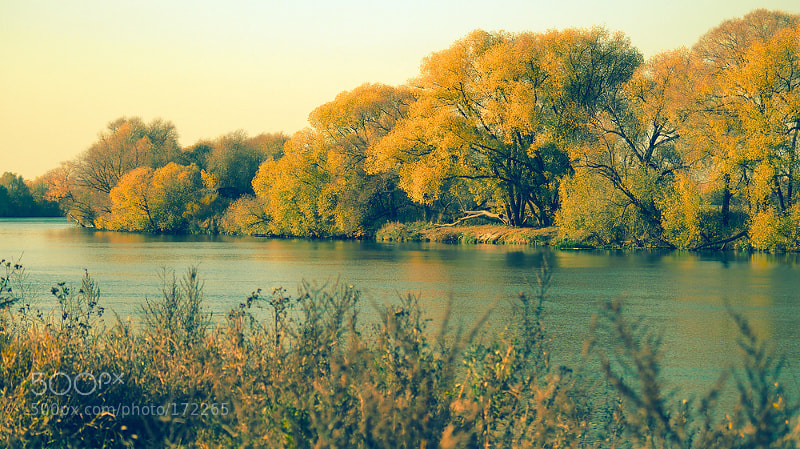 Photograph Forever Autumn by Ksushik S on 500px