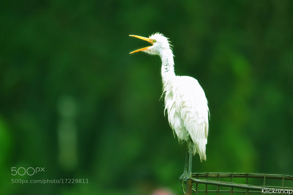 Photograph I Sing in Opera Style by Raghuvamsh Chavali on 500px