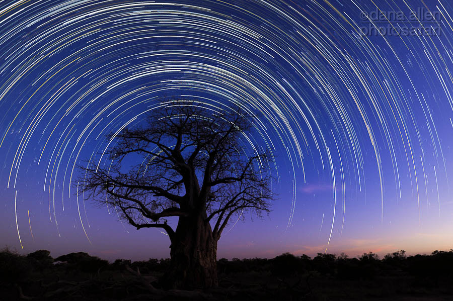 Photograph The Tree of Life by Dana Allen on 500px