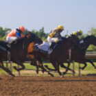 First three horses coming to the finish line at the 2011 Prince of Wales Stakes at Fort Erie Race Track.