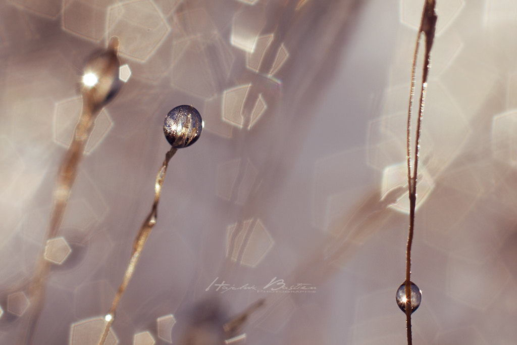 Photograph Boule de cristal by Bastien HAJDUK on 500px