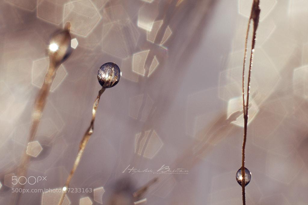 Photograph Boule de cristal by Bastien HAJDUK on 500px
