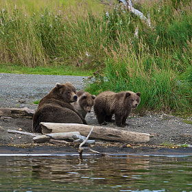 Relaxing Along The Shore Line  by Buck Shreck (buckswildlifephotography)) on 500px.com