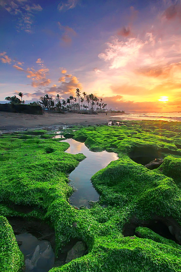 Photograph  Green Carpet by Agoes Antara on 500px