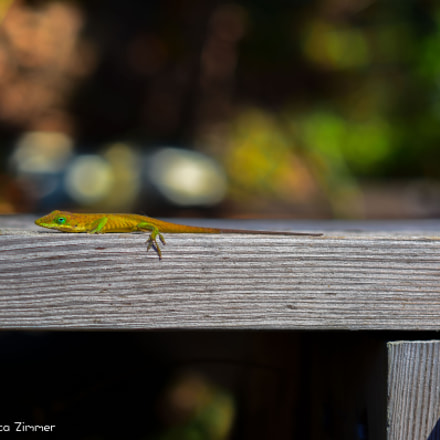 Anole On A Rail