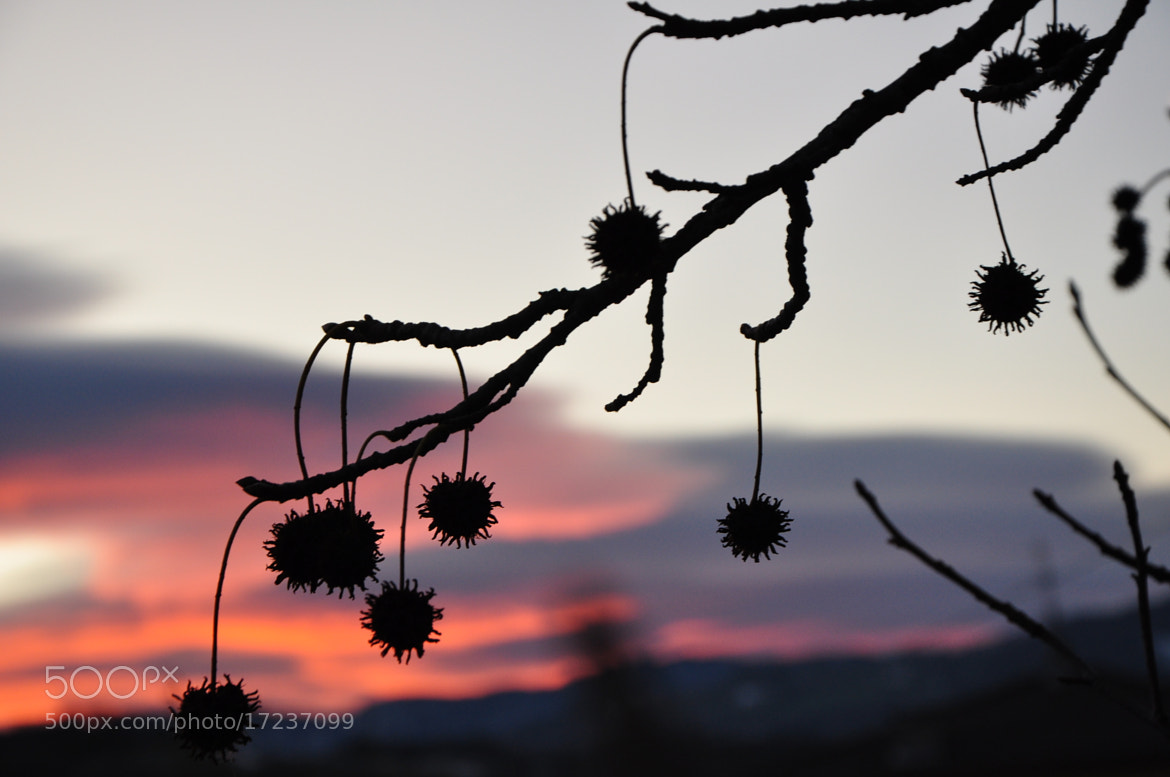 Photograph Backlight by Simone Righi on 500px