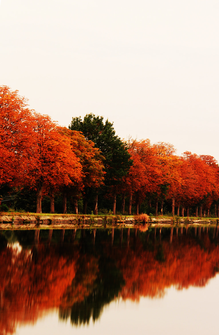 Photograph autumn reflection by Danny schurgers on 500px