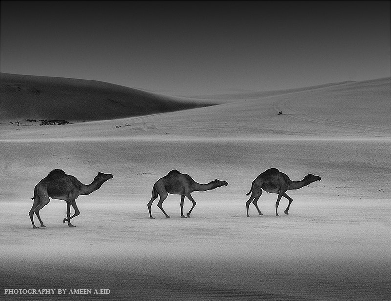Photograph V O Y A G E R by Ameen Eid on 500px