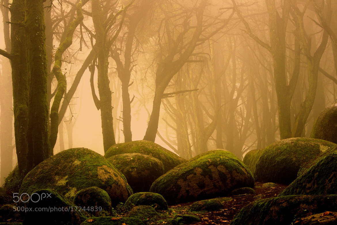 Photograph Where are the little goblins? by joaocarlo   on 500px