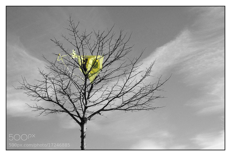 Photograph Las cometas no son para el otoño by Seco O Seco on 500px