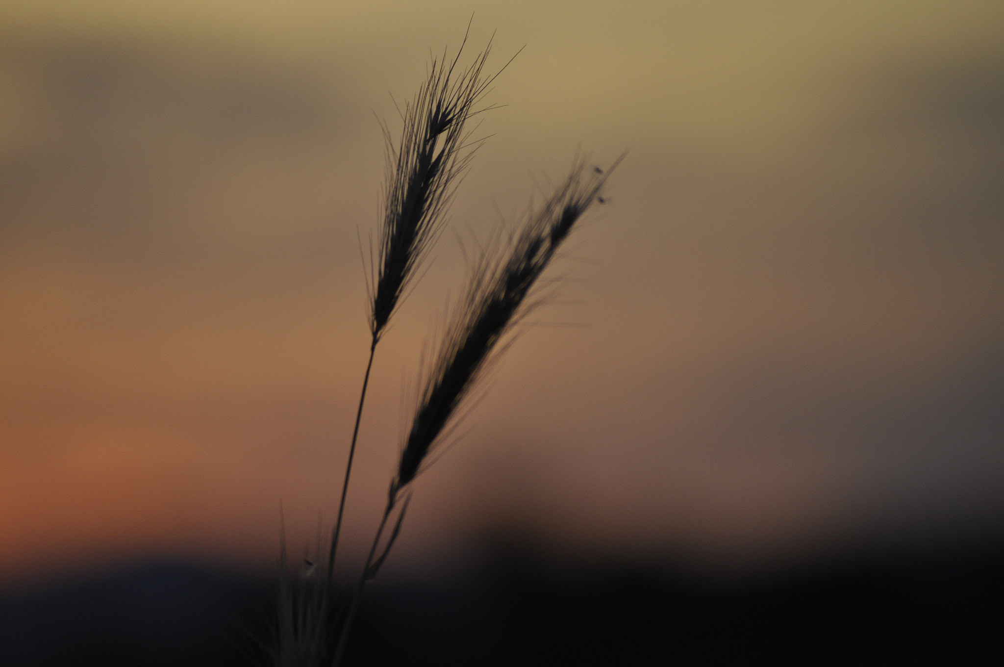 Photograph Grasses in the Evening by Nico Linde on 500px