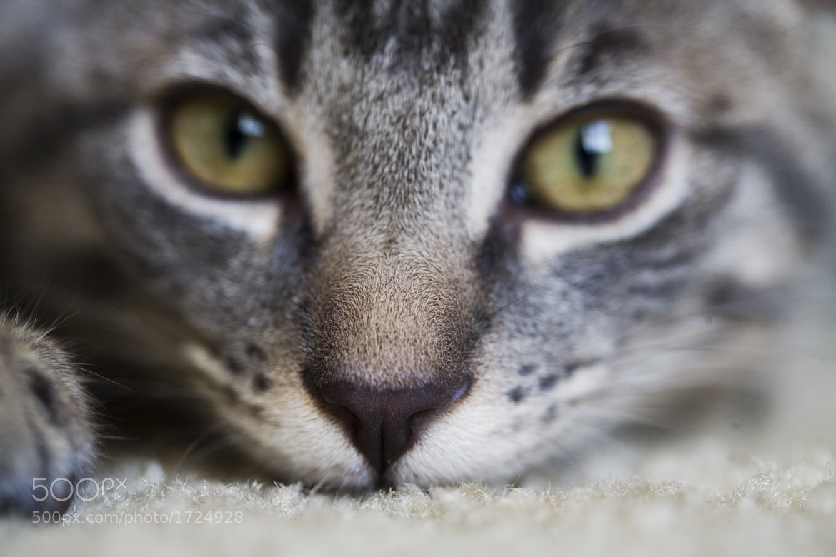 Photograph Focus by alyssa brule on 500px