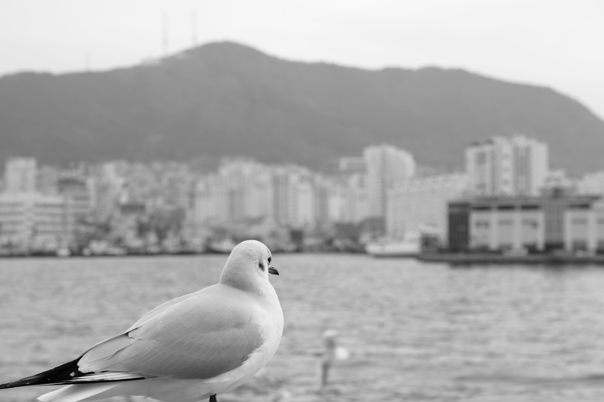 Photograph busan seagull by 기헌 홍 on 500px