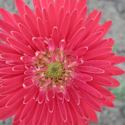 Color from flower, Canon IXUS 500 HS