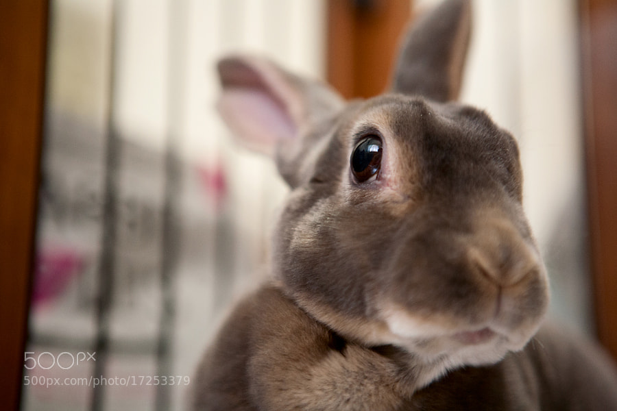 Photograph Pelugem bonita by rabbit portraits on 500px