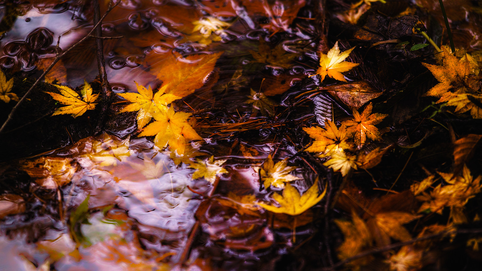 Photograph Golden Leaves by Hideo Ishijima on 500px