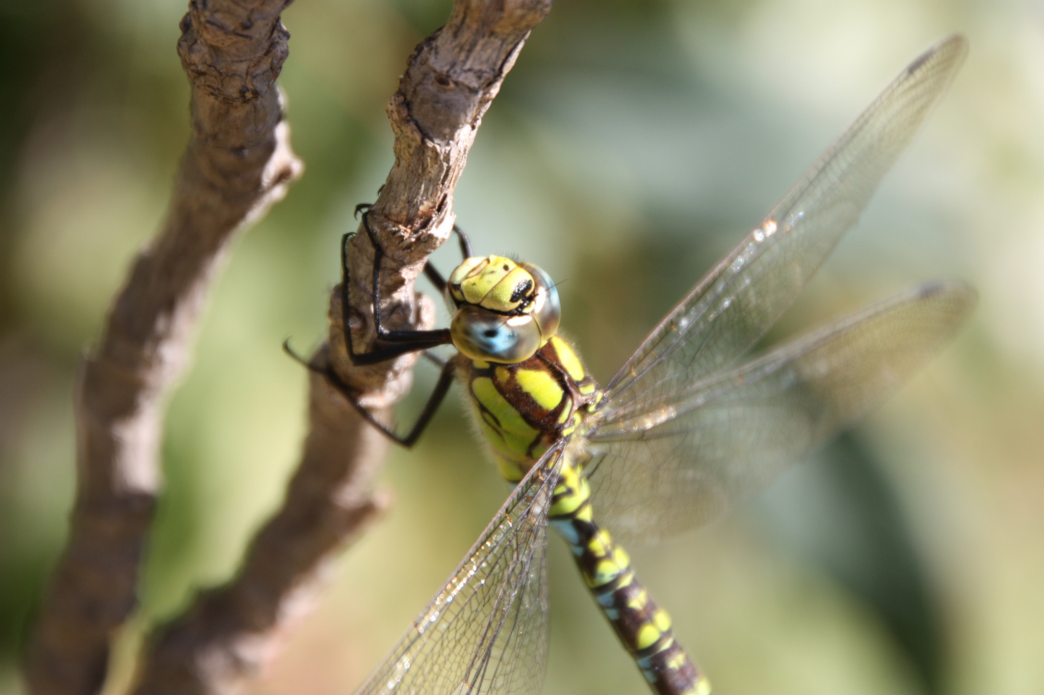 Photograph dragonfly by Wolfgang Windegger on 500px