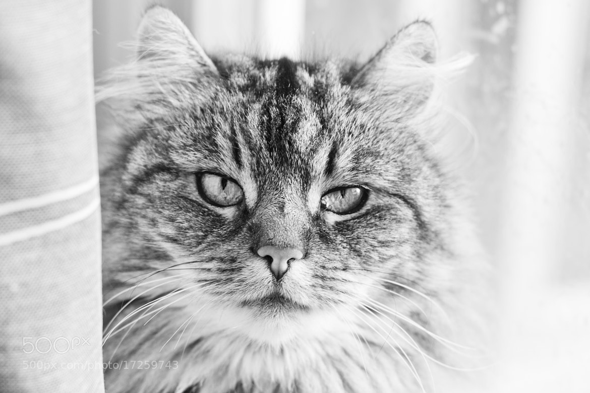 Photograph Cat by Kine Vestergaard on 500px