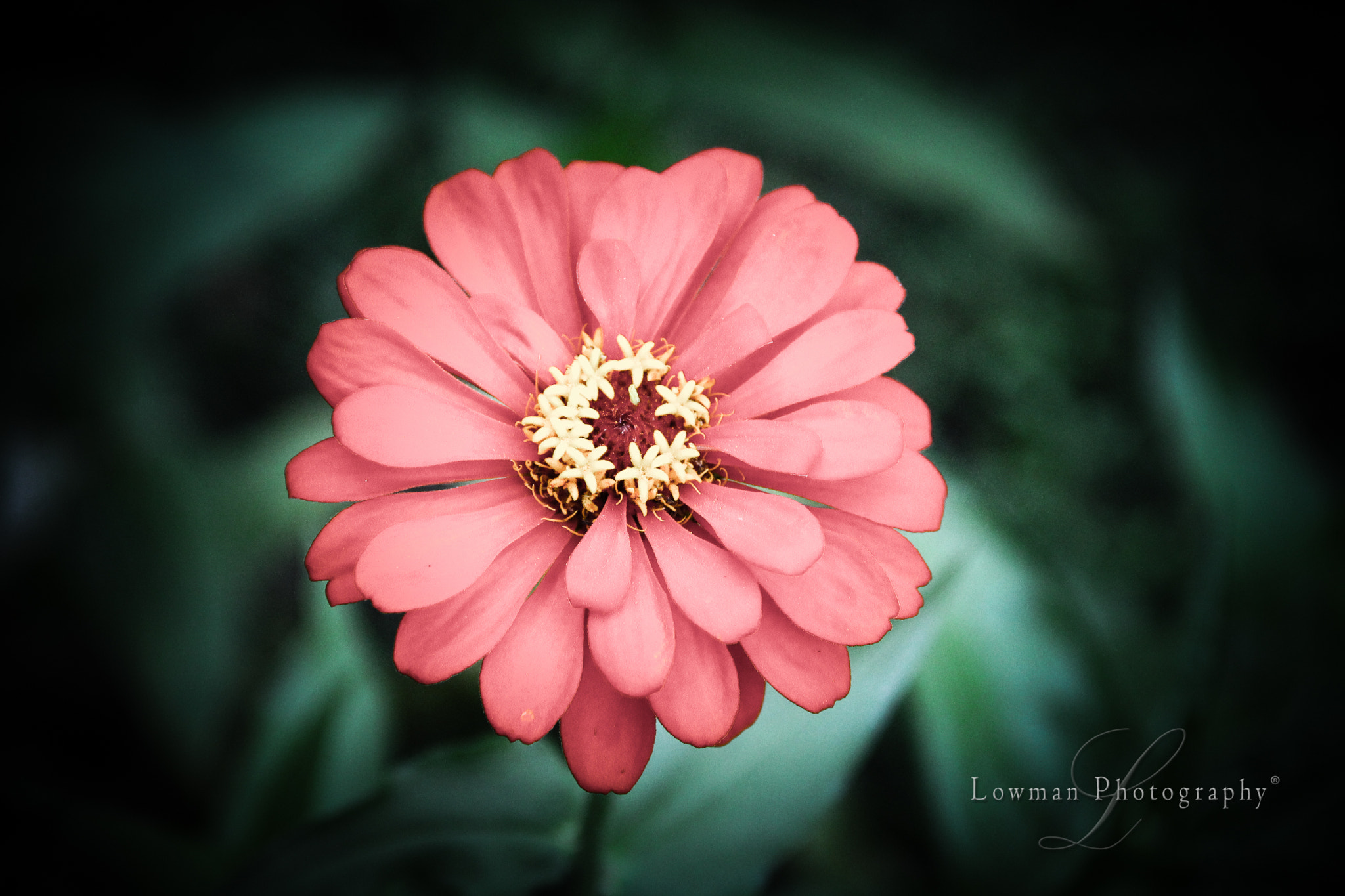 Photograph Garden Flower by Brian Lowman on 500px
