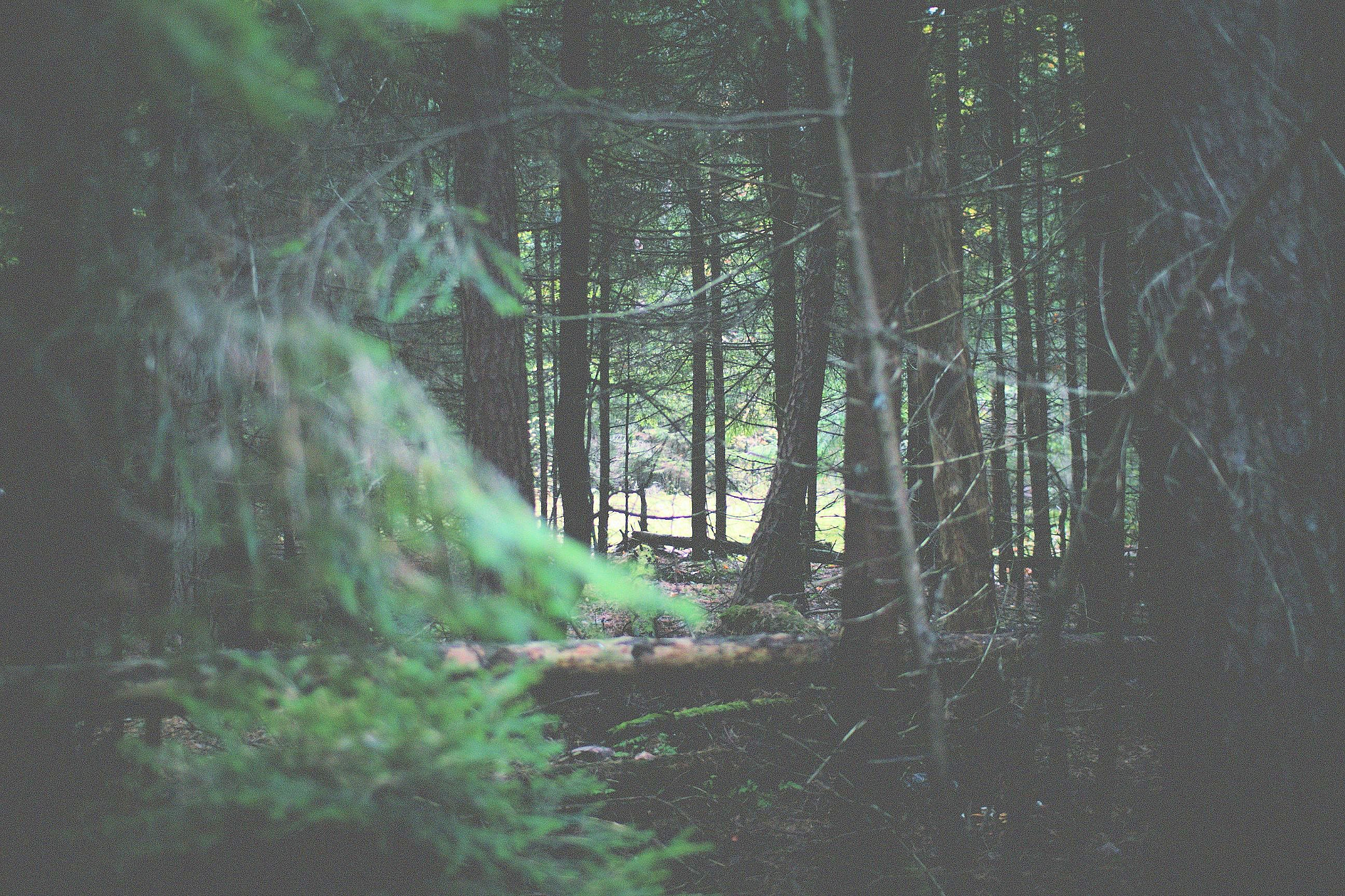Photograph wood by Dasha Yuhnovets on 500px