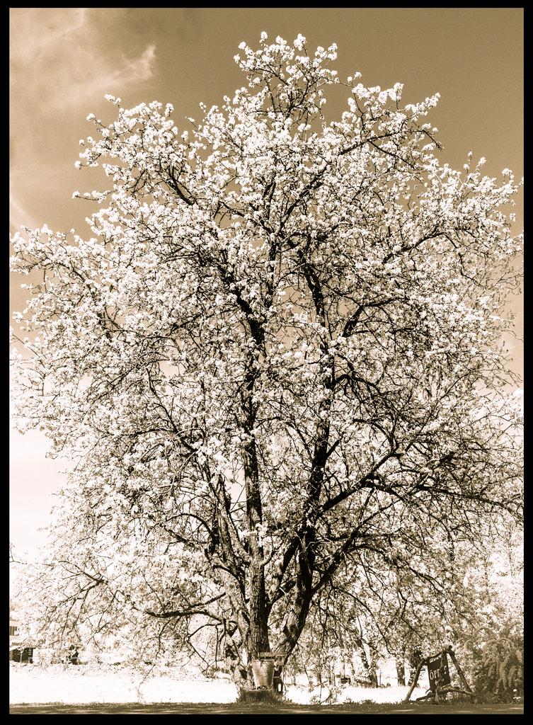 Photograph Winter? Summer? by Adam Wikman on 500px