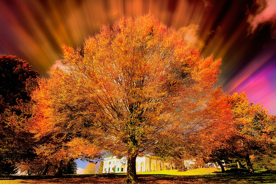 Photograph Autumn Colors Explosion by Roberto Becucci on 500px