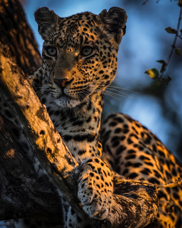 Amidst by Chris Fischer on 500px