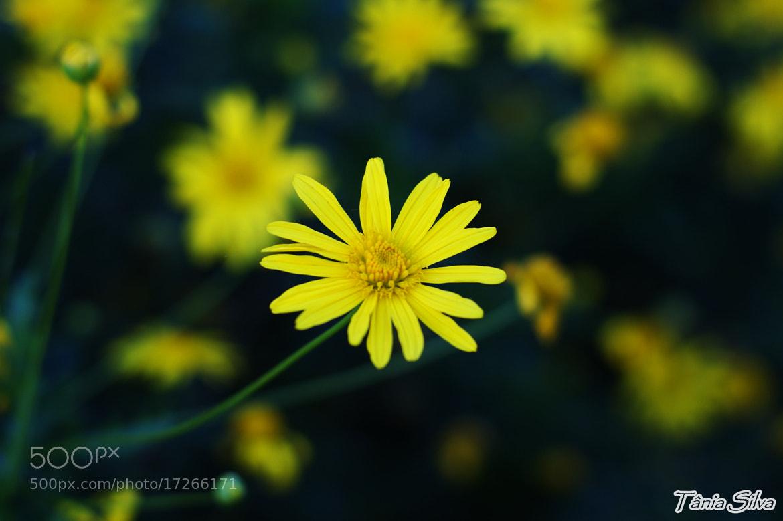 Photograph flower by Tânia S Silva on 500px