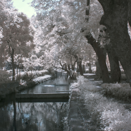 Infrared Photography, Canon EOS KISS F, Canon EF 24-85mm f/3.5-4.5 USM