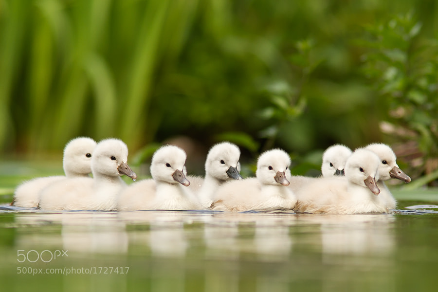 Photograph 'We are Family' by Roeselien Raimond on 500px