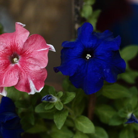 Flores, Canon EOS-1D, Canon EF 50mm f/1.8 II