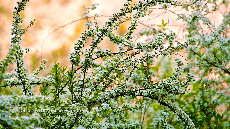Photograph Random Growing Flowers, Tokyo, Japan by Karim Kanoun on 500px